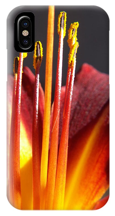 Fire Lily IPhone Case featuring the photograph Fire Lily by Amy Fose