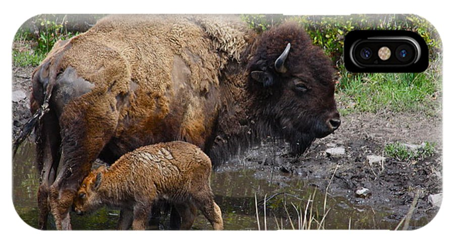Bison IPhone X Case featuring the photograph First Born by Karon Melillo DeVega