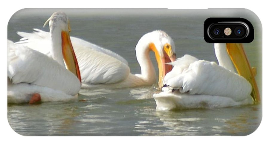 Pelicans IPhone X Case featuring the photograph Fishing by Wendy Fox