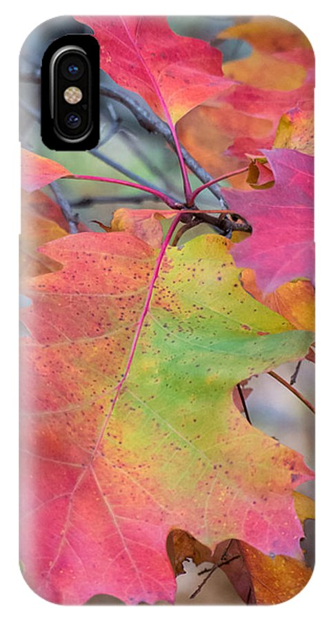 Fall Foliage IPhone X Case featuring the photograph Flaming Oak by Diane Moore