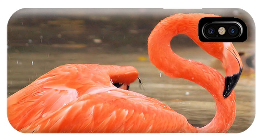 Flamingo IPhone X Case featuring the photograph Flamingo by Gaby Swanson