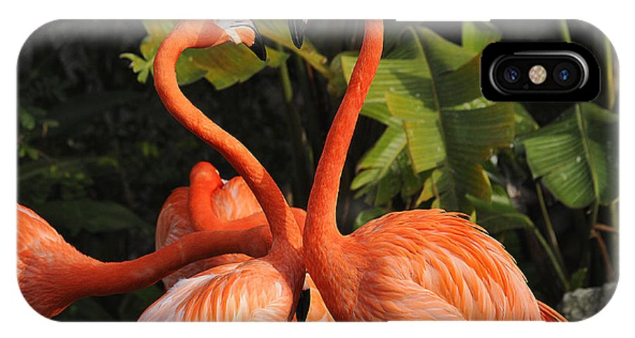 Flamingo IPhone X Case featuring the photograph Flamingo Heart by Keith Lovejoy