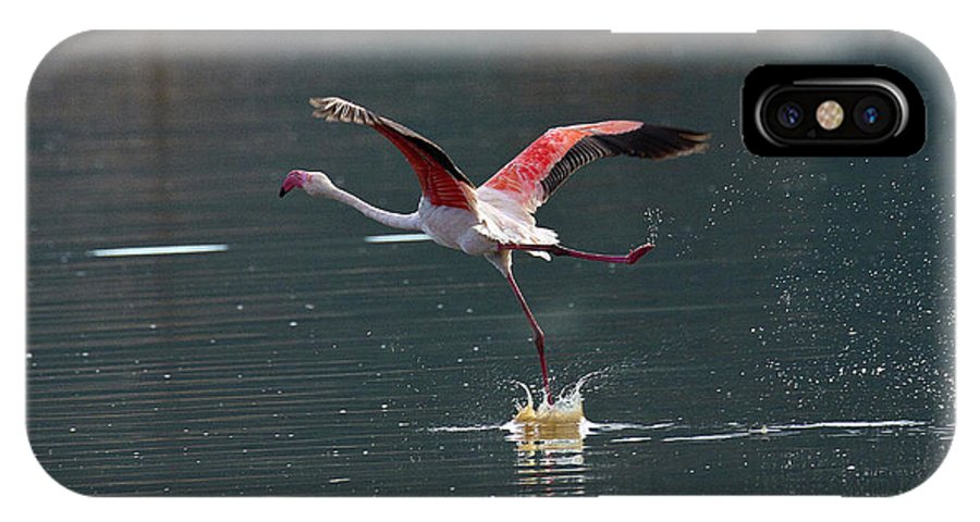 Flamingo IPhone X Case featuring the photograph Flamingo Kick Off by Janet Chung