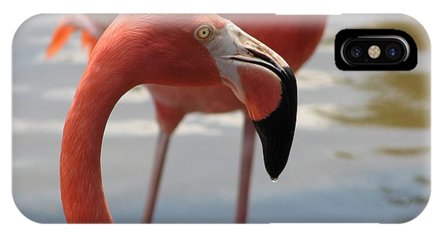 Flamingo IPhone X Case featuring the photograph Flamingo by Stacey May
