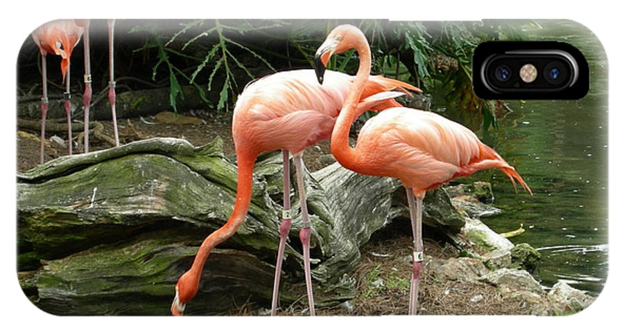 Flamingo IPhone X Case featuring the photograph Flamingos by Carol Turner