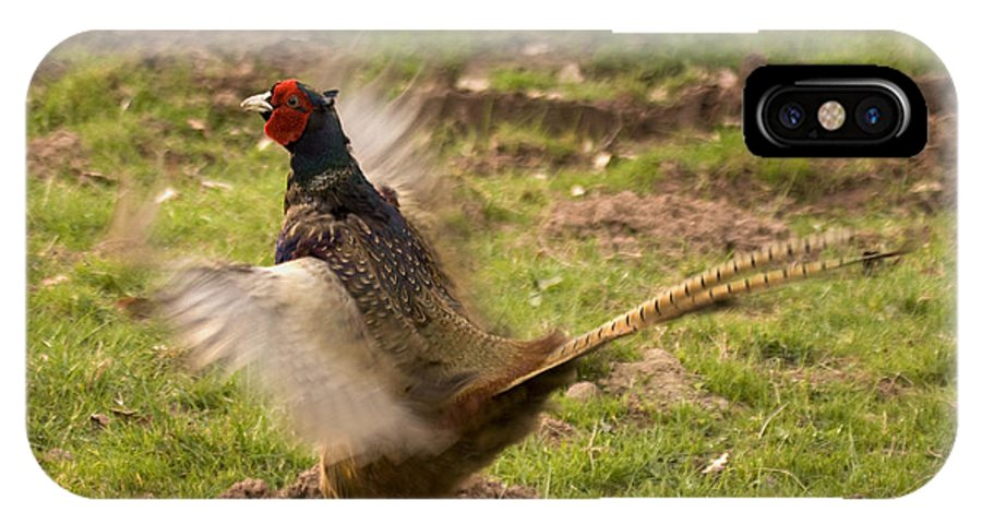 Pheasant IPhone X Case featuring the photograph Flapping The Wings by Angel Ciesniarska