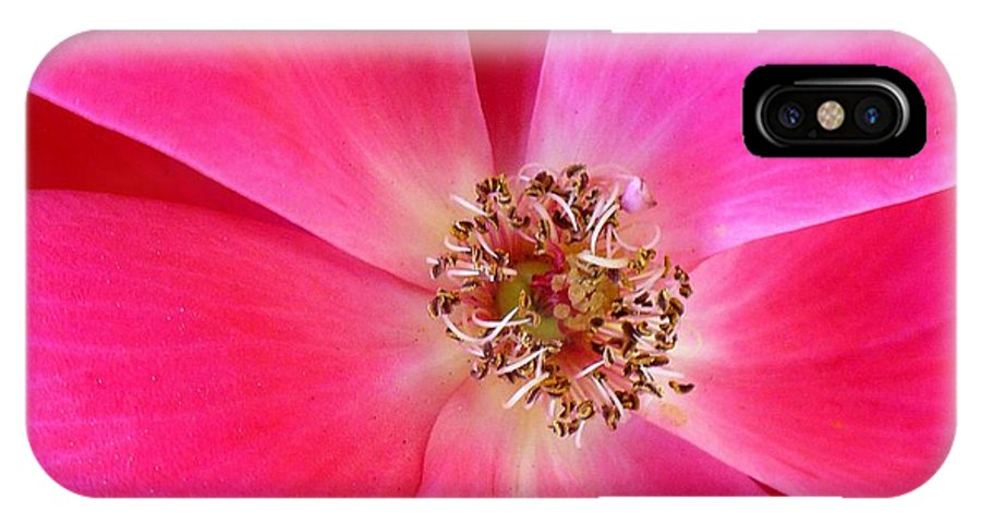 Nature IPhone X Case featuring the photograph Flat Rose Hot by Florene Welebny