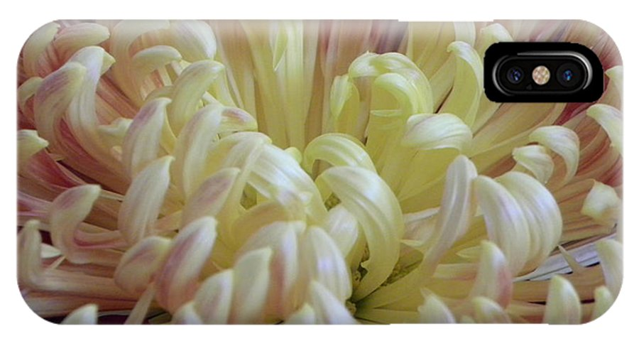 Nature IPhone X Case featuring the photograph Curled Flower by Shannon Turek