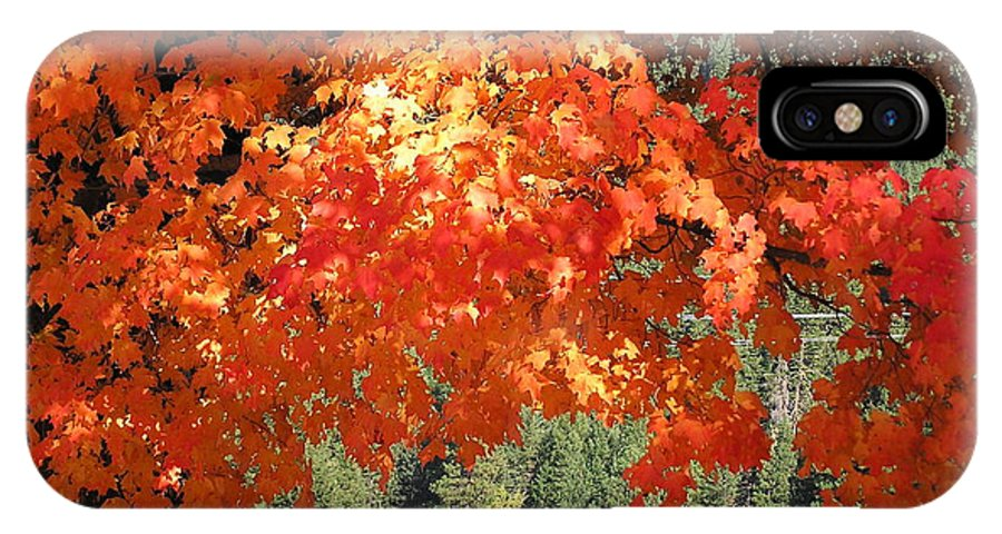 Autumn Photographs IPhone X Case featuring the photograph Flickering Sunlight by Louise Magno