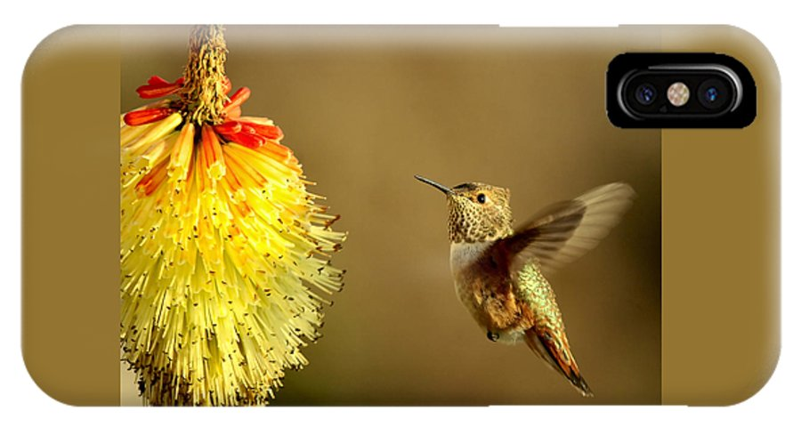 Hummingbird IPhone X Case featuring the photograph Flight Of The Hummer by Mike Dawson