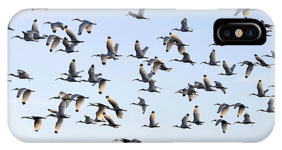 White Ibis IPhone X Case featuring the photograph Flight Of The White Ibis by David Lee Thompson