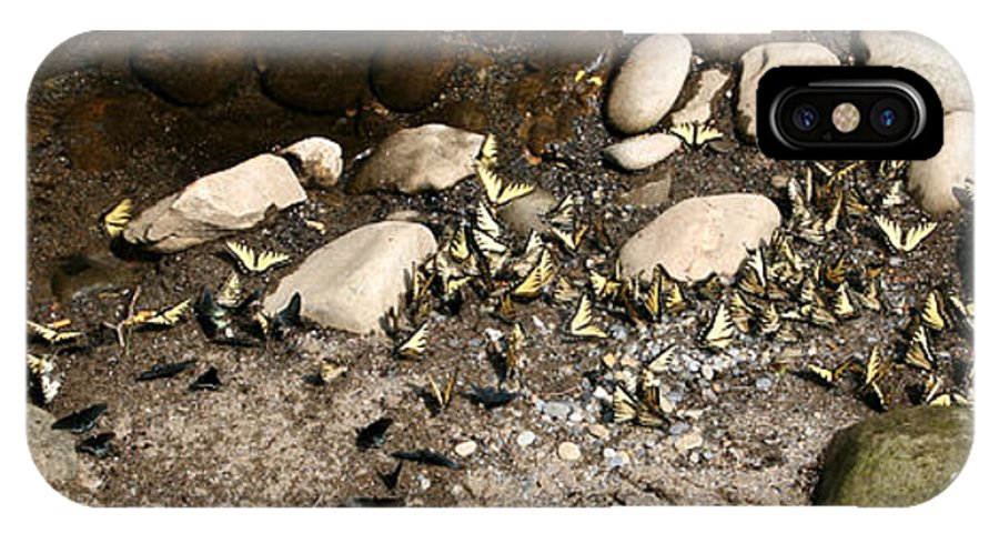 Butterfly IPhone X Case featuring the photograph Flock Of Butterflies Panarama by George Jones