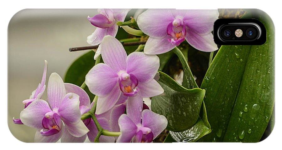 Orchids IPhone X Case featuring the photograph Floral Hangup by Robert Coffey