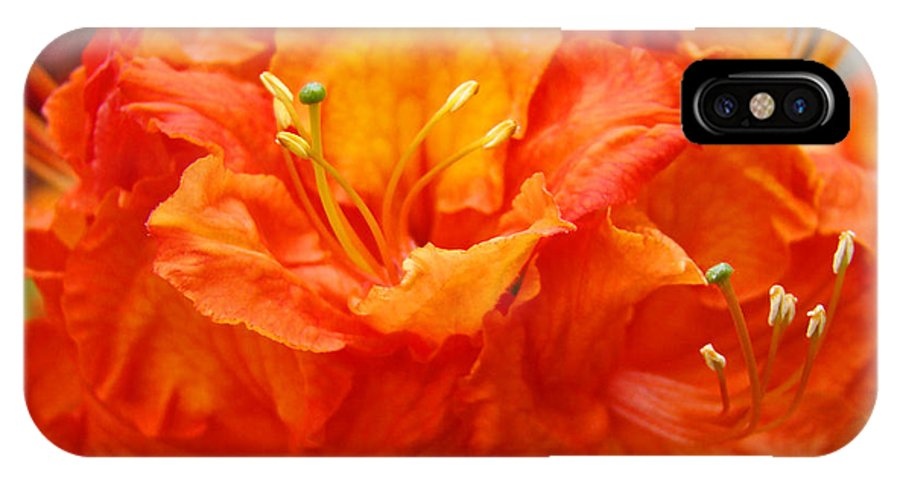 Rhodie IPhone X Case featuring the photograph Floral Rhodies Art Prints Orange Rhododendrons Canvas Art Baslee Troutman by Baslee Troutman