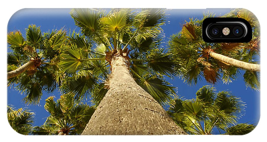 Florida. Palm Trees. Tropical IPhone X Case featuring the photograph Florida Palms by David Lee Thompson
