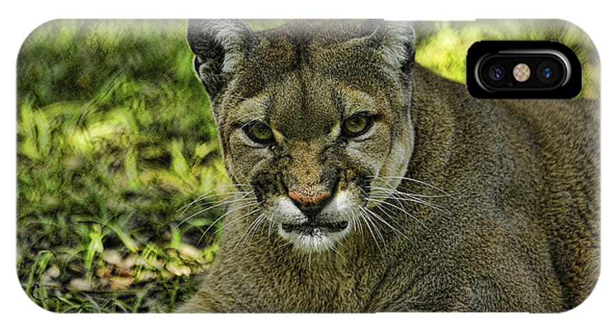 Panther IPhone X Case featuring the photograph Florida Panther Agitated by Keith Lovejoy