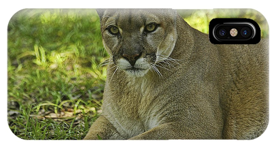 Panther IPhone X Case featuring the photograph Florida Panther by Keith Lovejoy