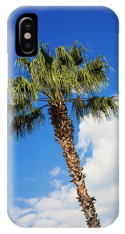 Florida State Tree IPhone X Case featuring the photograph Florida State Tree by Diane Macdonald