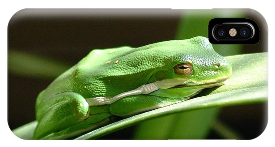 Frog IPhone Case featuring the photograph Florida Tree Frog by Ned Stacey