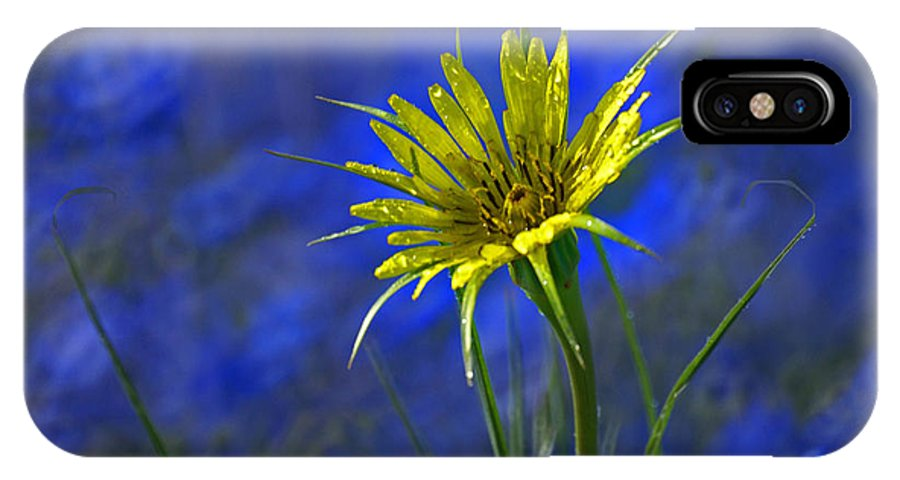 Flower IPhone X Case featuring the photograph Flower and Flax by Heather Coen
