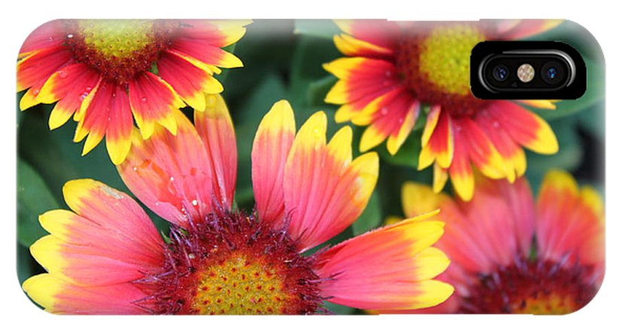 Flower IPhone X Case featuring the photograph Flower Burst by Lauri Novak