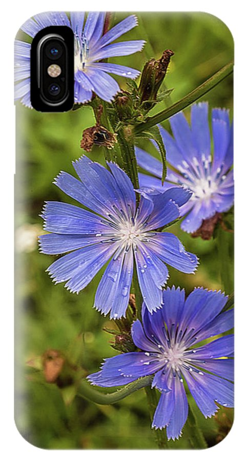 Flower IPhone X Case featuring the photograph Flower Chicory by Alex Konakov