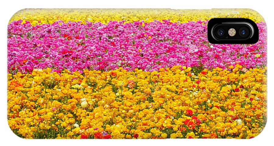 Flower IPhone X / XS Case featuring the photograph Flower Fields Carlsbad Ca Giant Ranunculus by Christine Till