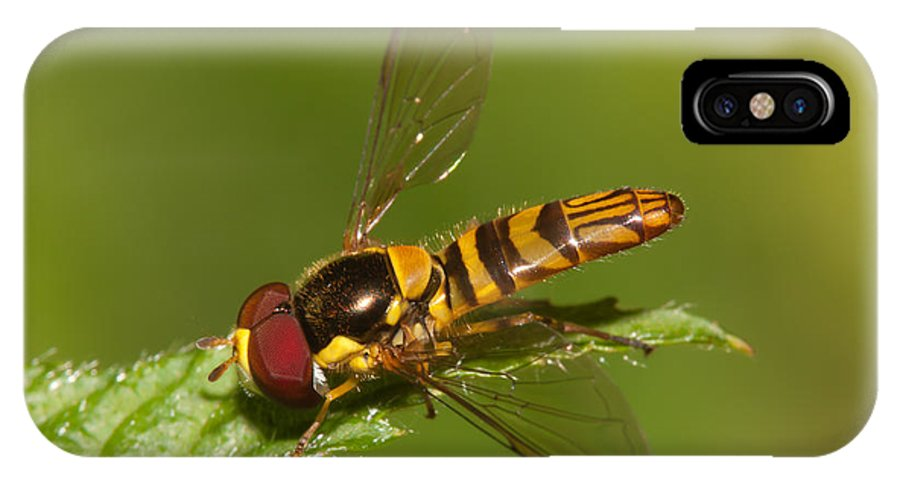 Clarence Holmes IPhone X Case featuring the photograph Flower Fly Allograpta Obliqua by Clarence Holmes