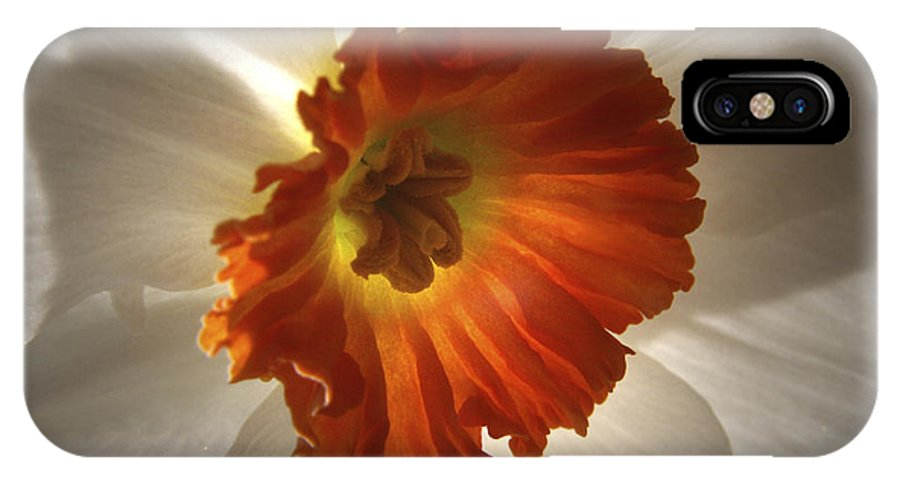 Flowers IPhone Case featuring the photograph Flower Narcissus by Nancy Griswold