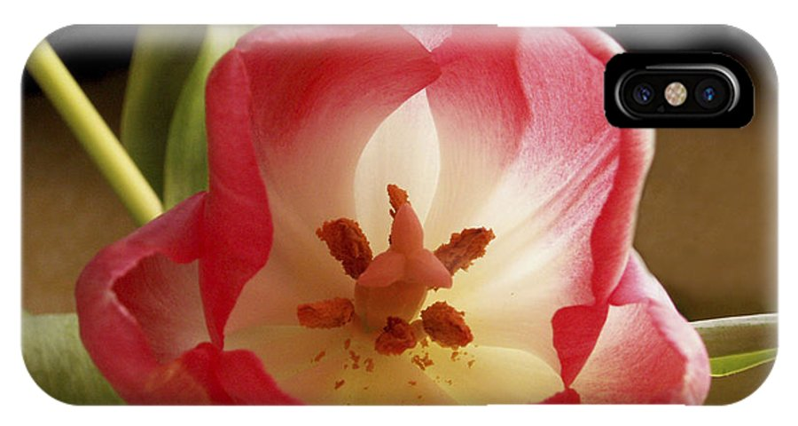 Flowers IPhone Case featuring the photograph Flower Tulip by Nancy Griswold