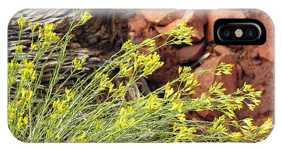Flower IPhone Case featuring the photograph Flower Wood And Rock by Marilyn Hunt