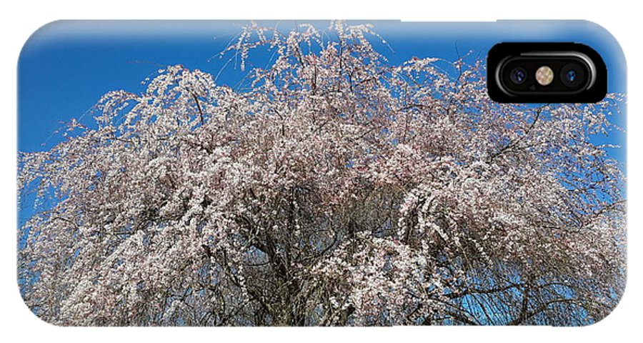 Spring IPhone X Case featuring the photograph Flowering Cherry by Joe D Dry