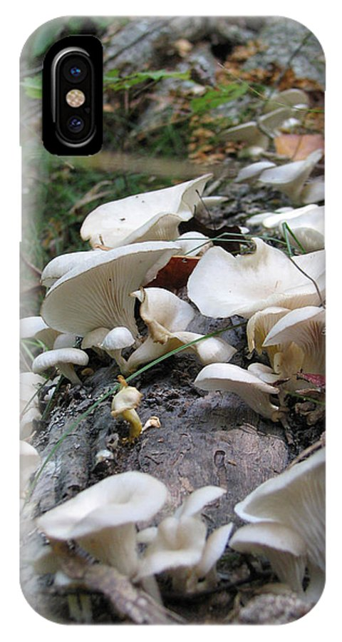 Mushroom IPhone X Case featuring the photograph Flowering Fungi by Stacey May