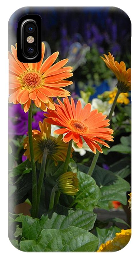 Daisy  Flower IPhone X / XS Case featuring the photograph Flowers 730 by Joyce StJames