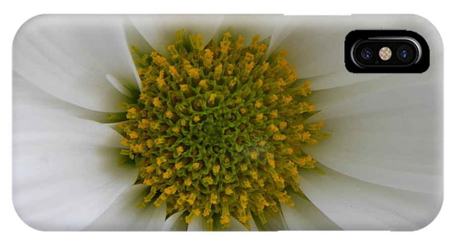 Nature IPhone X Case featuring the photograph Core Of A Daisy by Shannon Turek