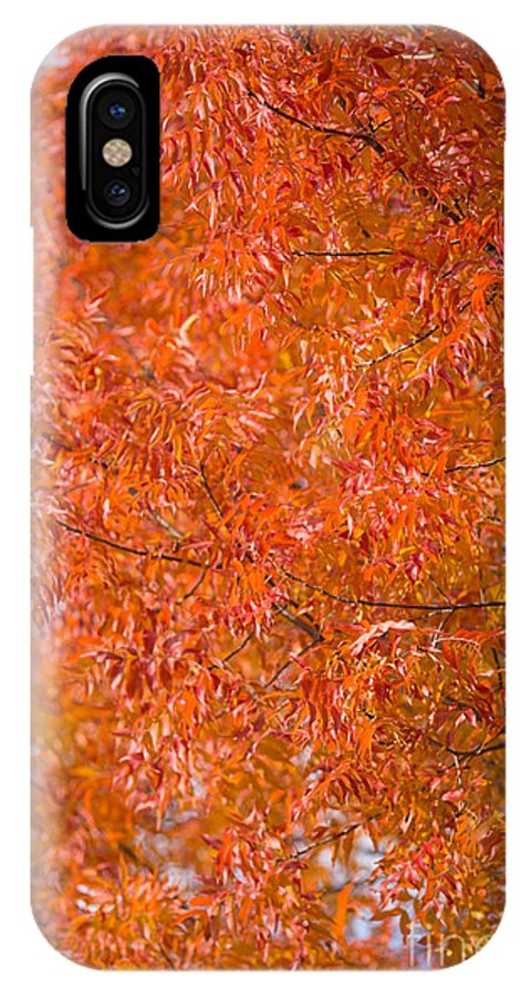 Fall IPhone X Case featuring the photograph Flustered Forrest by Digiblocks Photography