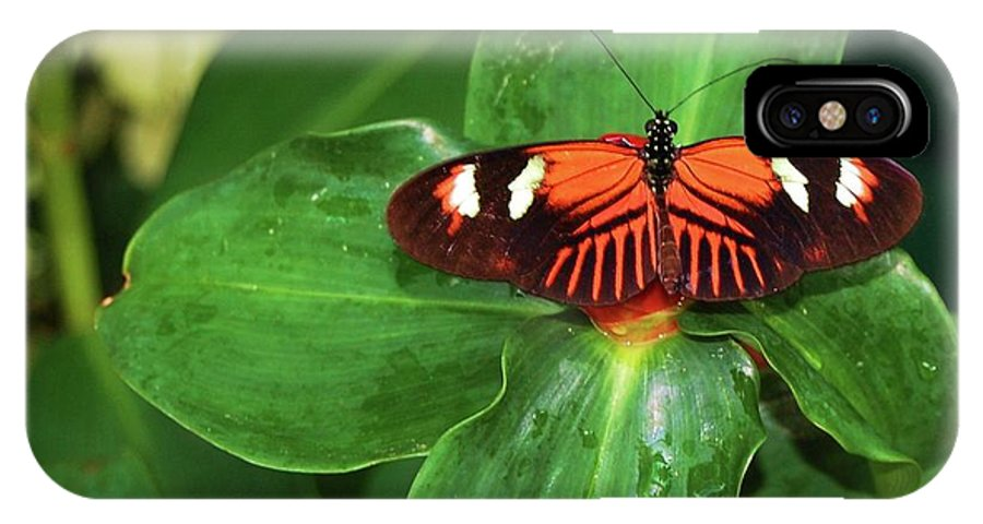Butterfly IPhone X Case featuring the photograph Fly Away by Debbi Granruth