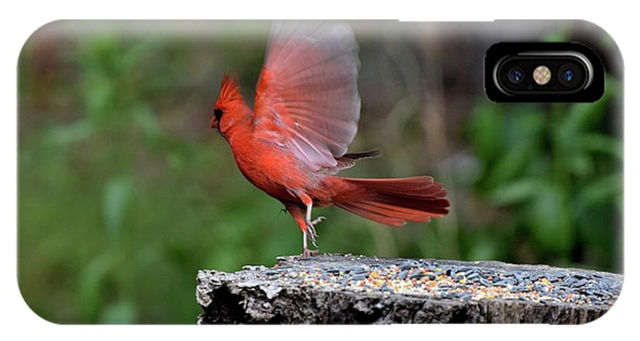 Bird IPhone X Case featuring the photograph Fly Birds 318 by Lawrence Hess