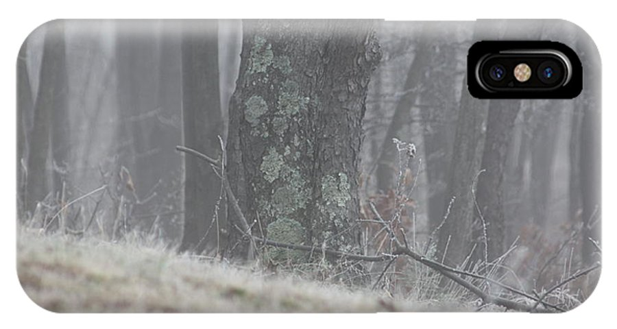 Fog Mist Trees Moss Landscape IPhone X Case featuring the photograph Foggy Moss by Mike Poorman