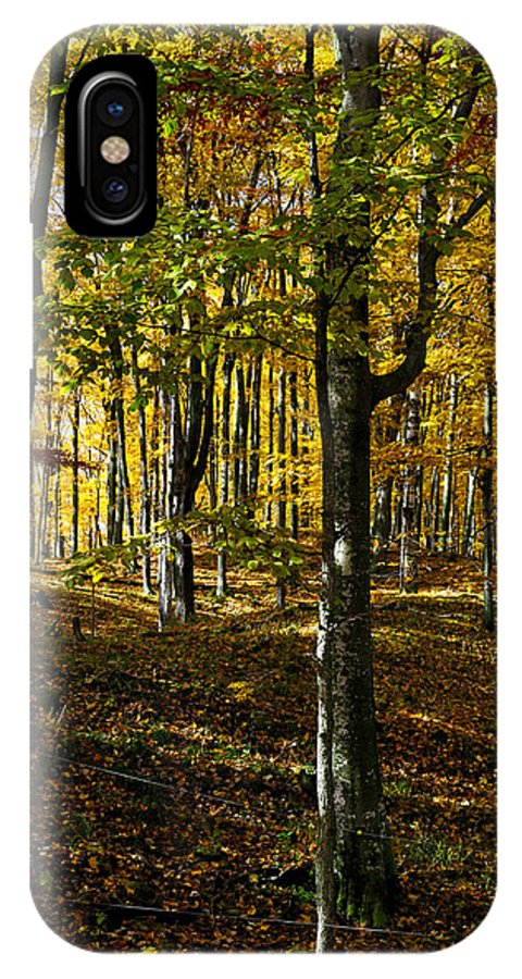 Trees IPhone X Case featuring the photograph Forest Floor Two by Tim Nyberg