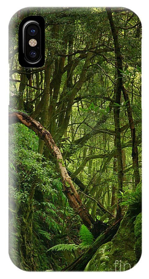 Woodland IPhone X Case featuring the photograph Forest by Gaspar Avila