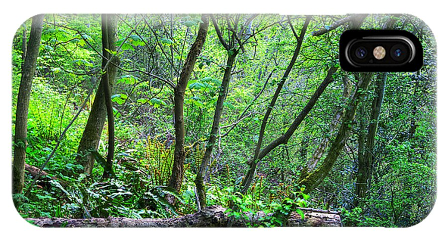 Branch IPhone X Case featuring the photograph Forest In Hdr by Svetlana Sewell