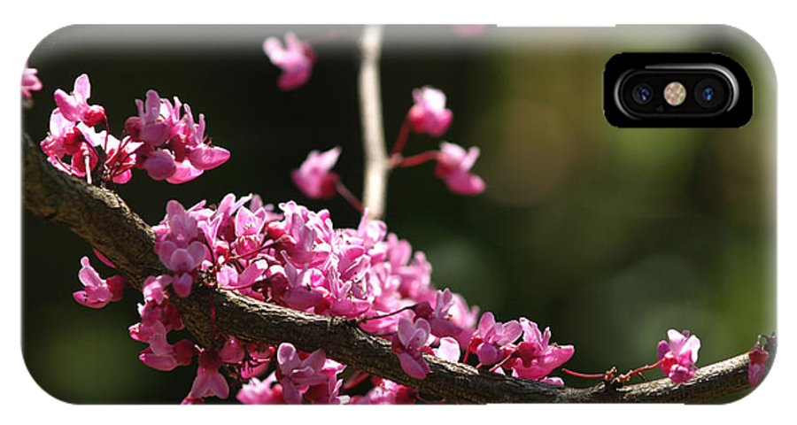 Flower IPhone Case featuring the photograph Forest Pansy Redbud Branch In May by Anna Lisa Yoder