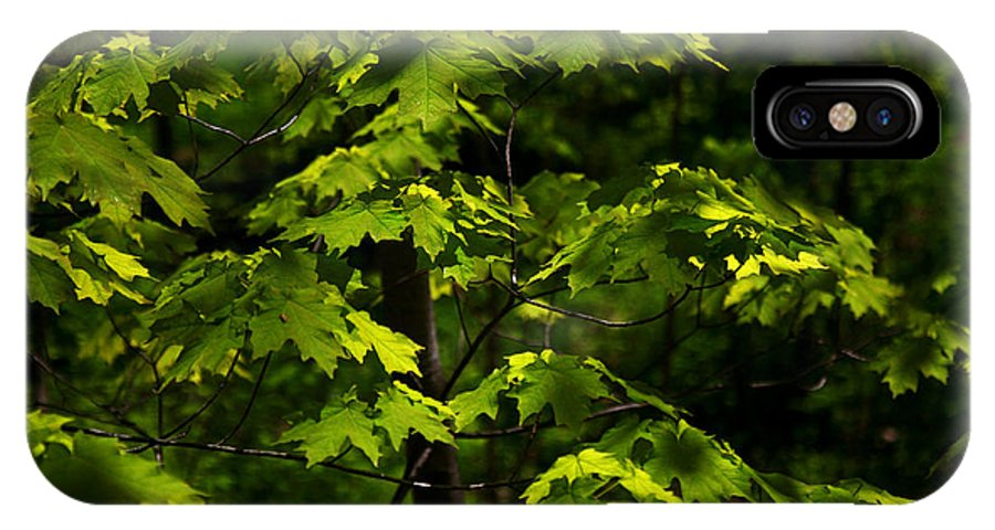 Forest IPhone X Case featuring the photograph Forest Shades by Randy Oberg