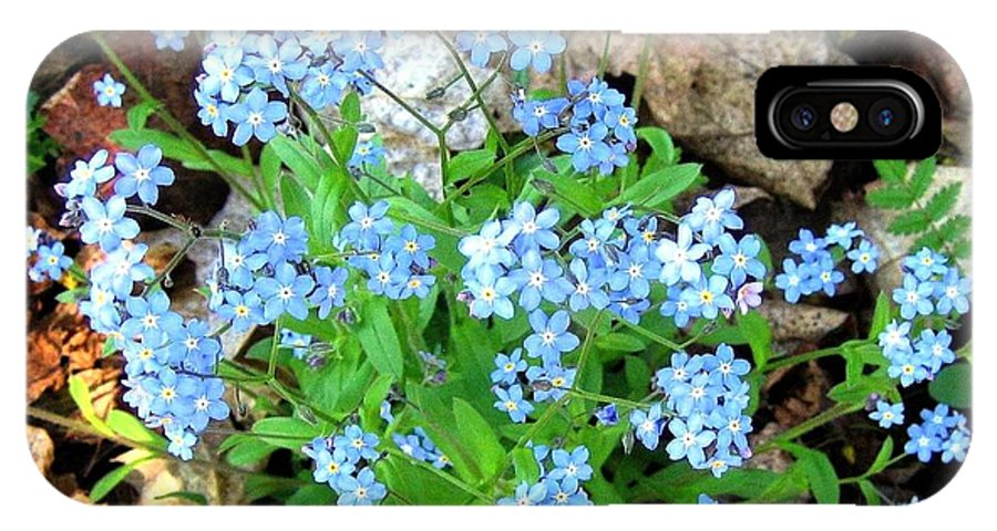 Forget-me-not IPhone X Case featuring the photograph Forget-me-not by Will Borden