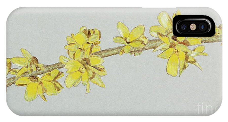 Color IPhone X Case featuring the drawing Forsythia Sprig by Glenda Zuckerman