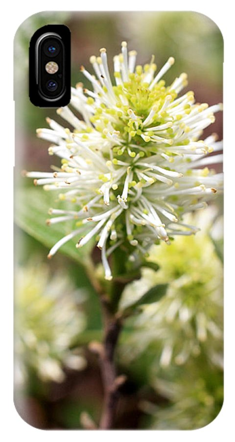 Spring Flowers IPhone X Case featuring the photograph Fothergilla by David Bearden