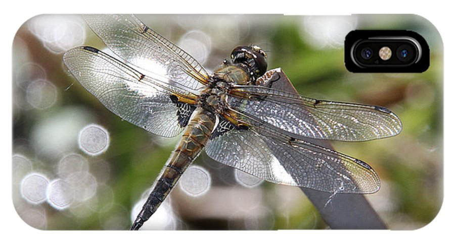 Four-spotted Skimmer IPhone X Case featuring the photograph Four-spotted Skimmer by Doris Potter