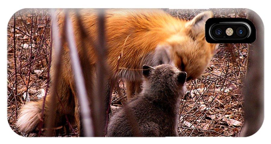Fox IPhone X Case featuring the photograph Fox by Carol Milisen