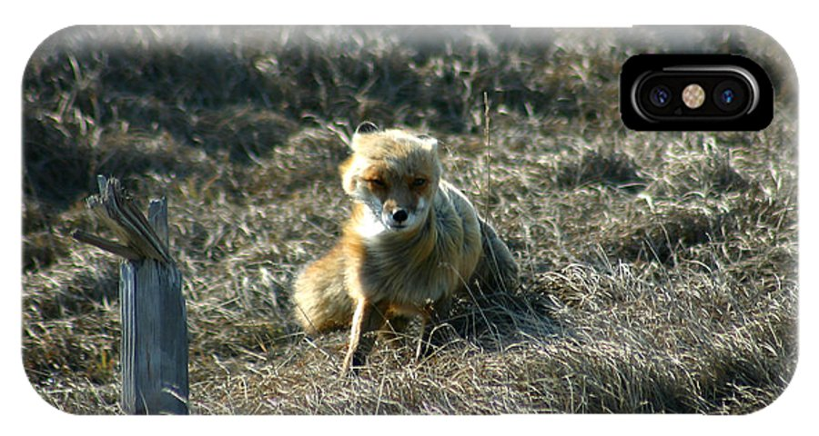 Red Fox IPhone X Case featuring the photograph Fox In The Wind by Anthony Jones